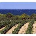 Sicilia e Pantelleria